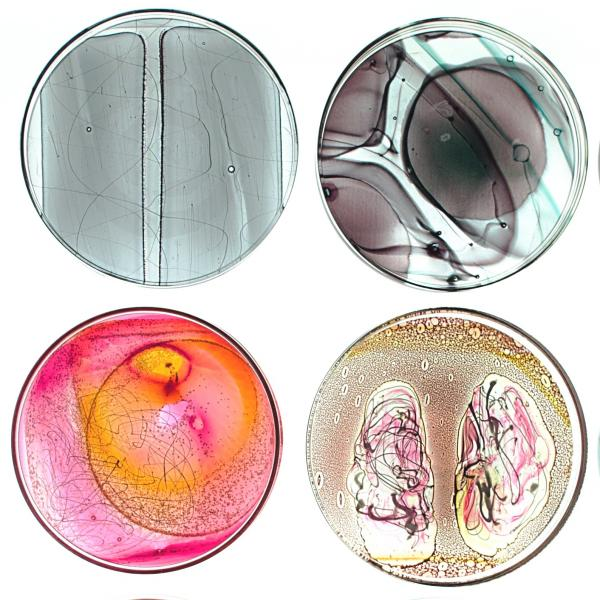 Rectangular panel featuring 12 glass circles that resemble petri dishes. Each circle contains glass shapes and swirls in different colors as if looking at a specimen through a microscope.